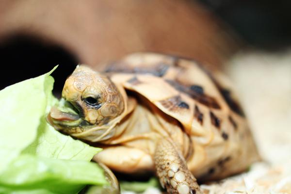 Feeding_Tortoise